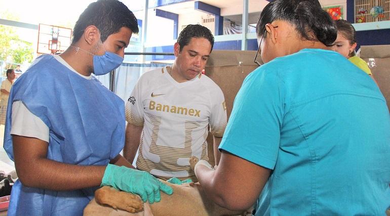 bienestar_animal_acapulco_costa_azul (1)