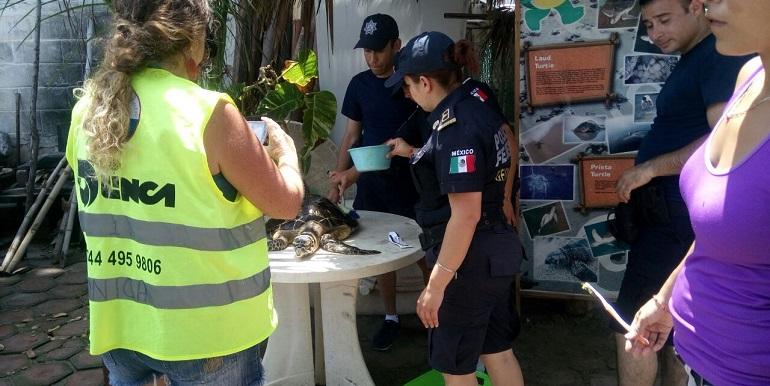 gendarmeria_apoyo_tortugas_acapulco (2)