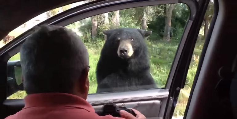 oso_abre_puerta