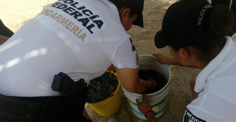 rescate_tortugas_acapulco-1