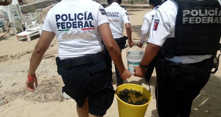 rescate_tortugas_acapulco-2