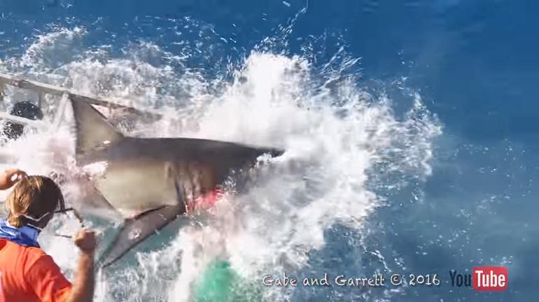 tiburon_isla_guadalupe