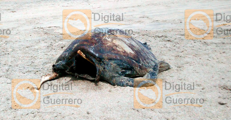[Image: tortugas_muertas_copala_guerrero.jpg]